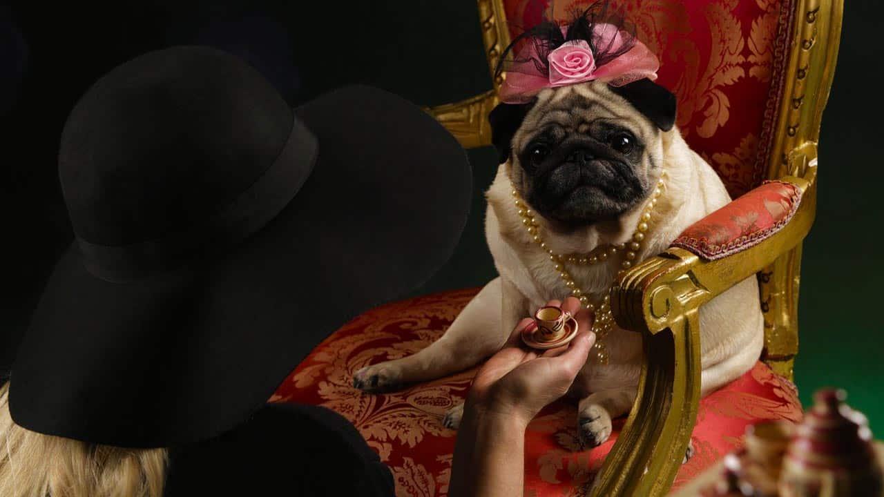 Pet Day: animali da compagnia e divorzio, facciamo chiarezza